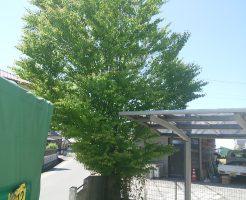 仲多度郡まんのう町で庭木の伐採 施工事例紹介