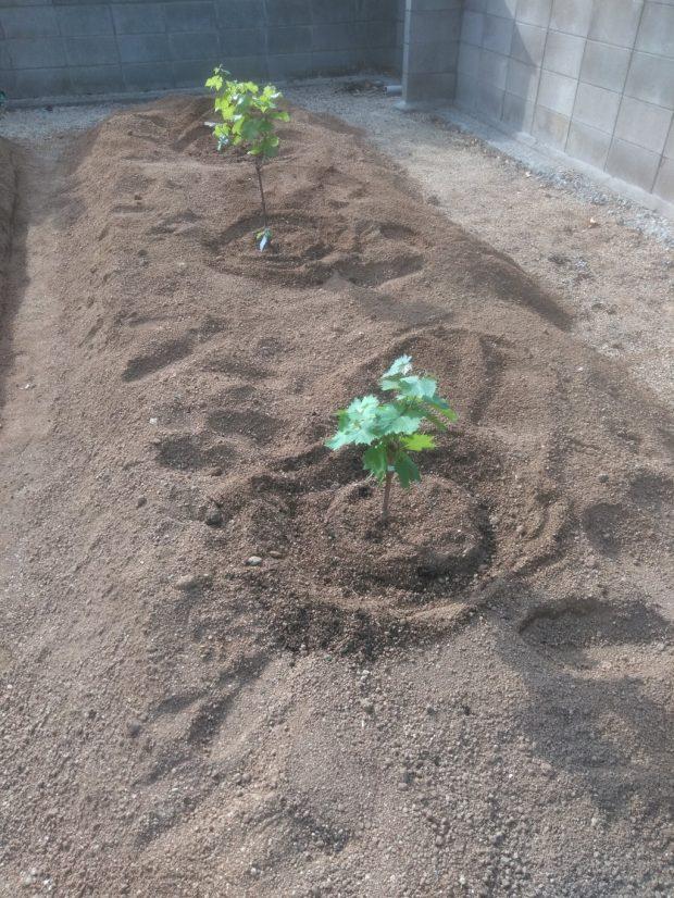 【高松市高松町】苗木4本の植樹のご依頼 お客様の声